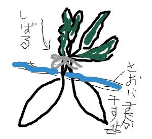 Cocolog_oekaki_2008_12_10_10_21