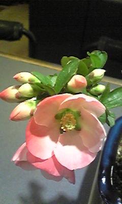 桜満開でロト6予想